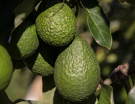 Avocado on terveellinen, mutta samat rasvahapot saa ekologisemmin rypsiöljystä